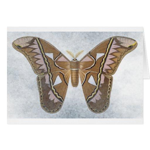 Colección del insecto - polilla tarjetón