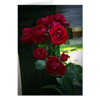 Colección del jardín de Lorri Felicitacion