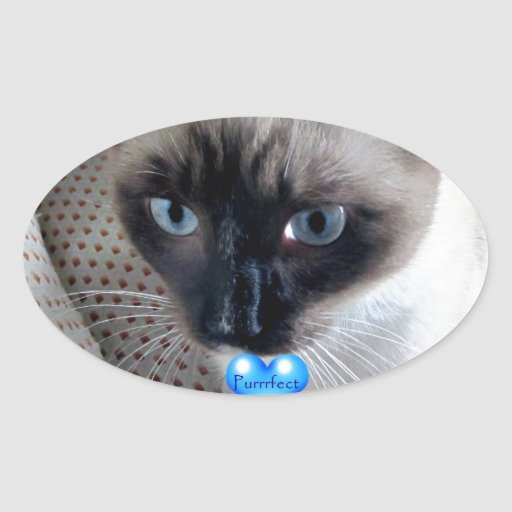 Colección del regalo del gatito de la raqueta de P Pegatina De Oval Personalizadas