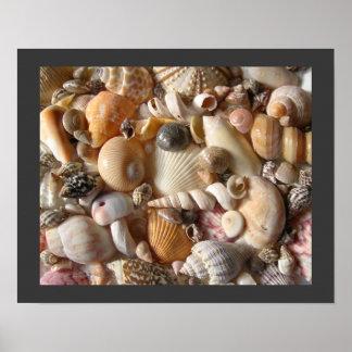Colección del Seashell de Sanibel Poster