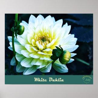 Colección floral del vintage - dalia blanca impresiones