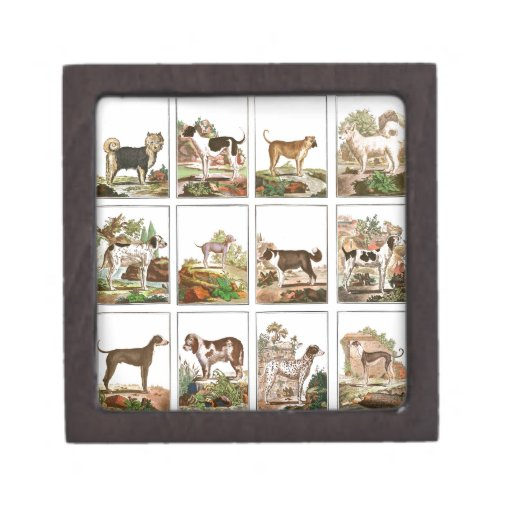 Colección grande de los perros (3x4) caja de regalo de calidad