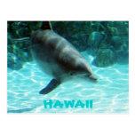 Colección hawaiana del delfín tarjeta postal