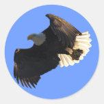Colección II del vuelo de Eagle calvo Pegatina Redonda