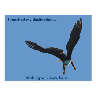 Colección II del vuelo de Eagle calvo Postal