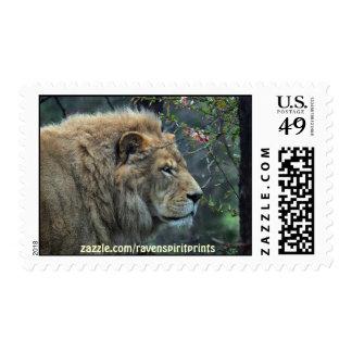 Colección postal africana del gato grande del león sellos