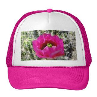 Colección rosada de la flor del cactus de erizo gorras