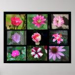 Colección rosada/púrpura de la flor impresiones