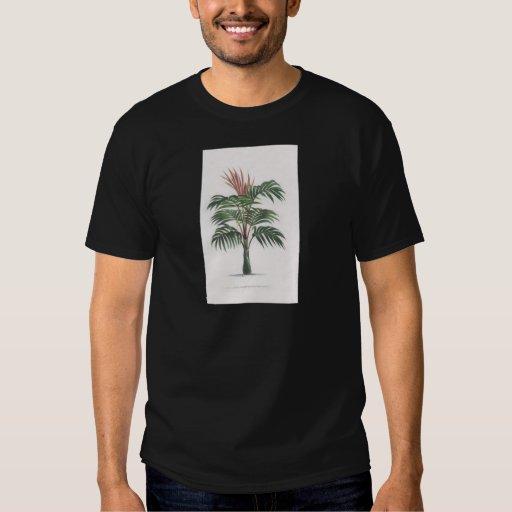 colección tropical de la palmera - V de dibujo Playeras