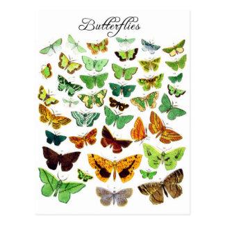 Colección verde de la mariposa postal