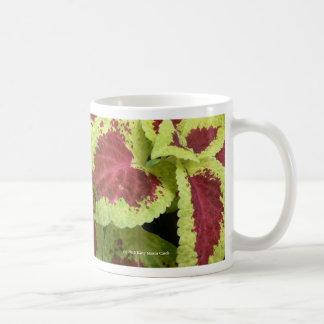 Coleo bonito taza clásica