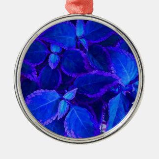 Coleo colorized azul de la planta adorno redondo plateado
