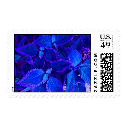 Coleo colorized azul de la planta estampilla
