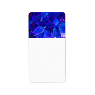 Coleo colorized azul de la planta etiqueta de dirección
