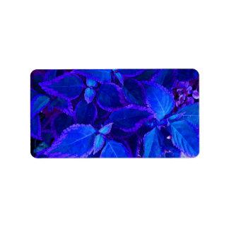 Coleo colorized azul de la planta etiquetas de dirección