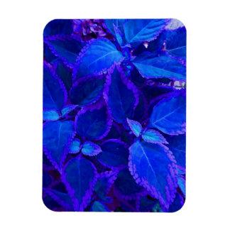 Coleo colorized azul de la planta imán flexible