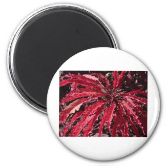 coleo rojo imán redondo 5 cm