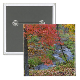 Coles Creek lined with autumn maple trees near 2 Inch Square Button