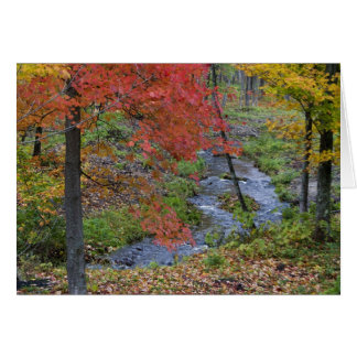 Coles Creek lined with autumn maple trees near Cards