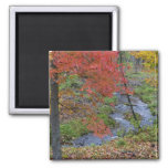 Coles Creek lined with autumn maple trees near 2 Inch Square Magnet