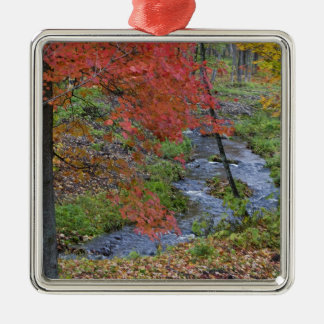 Coles Creek lined with autumn maple trees near Metal Ornament