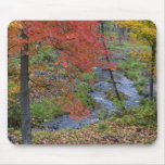Coles Creek lined with autumn maple trees near Mouse Pad