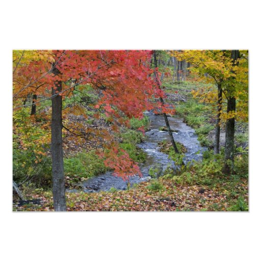 Coles Creek lined with autumn maple trees near Photo Art