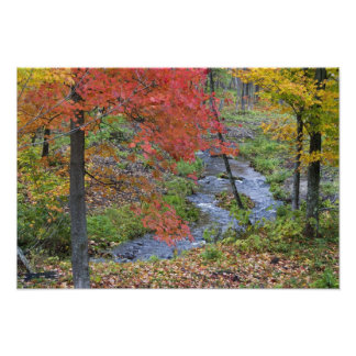 Coles Creek lined with autumn maple trees near Photographic Print