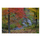 Coles Creek lined with autumn maple trees near Poster
