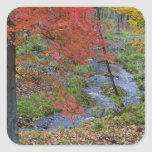 Coles Creek lined with autumn maple trees near Square Sticker
