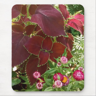 Coleus and Strawflowers Mouse Pad