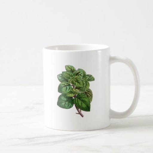 Coleus Gibsonii Coffee Mug