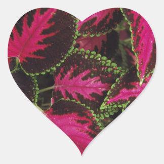 coleus heart sticker