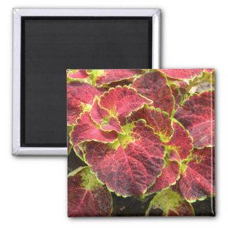 Coleus leaves 2 inch square magnet