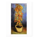 Coleus Plant in a Flowerpot, Vincent van Gogh Postcard
