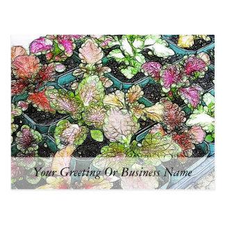 Coleus seedlings postcard