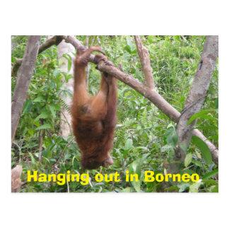 Colgante hacia fuera en los animales divertidos de postales