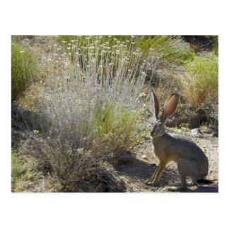 Colgante hacia fuera en los rastros del desierto tarjetas postales