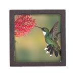 colibrí 1.jpg caja de joyas de calidad