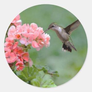 colibrí 2.jpg pegatina redonda