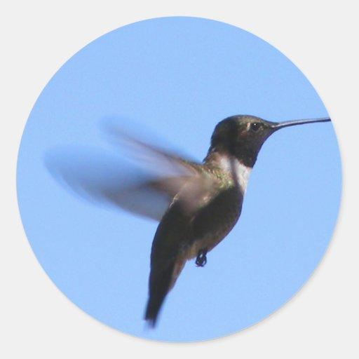 colibrí 2J2 en vuelo en un cielo azul Pegatina Redonda