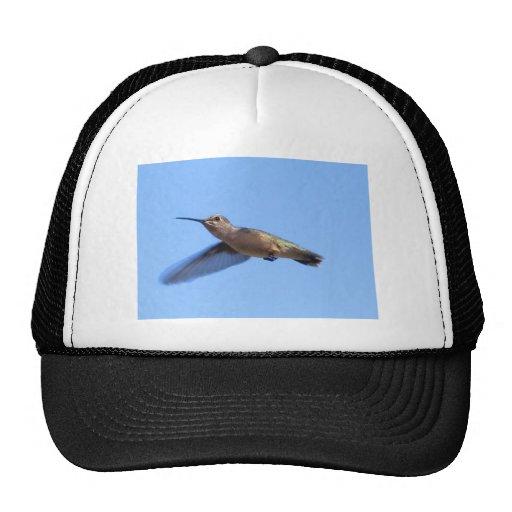 colibrí 3J2 en un cielo azul de Idaho Gorras De Camionero