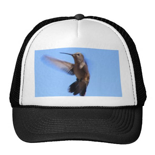 colibrí 6J en vuelo en un cielo azul Gorro