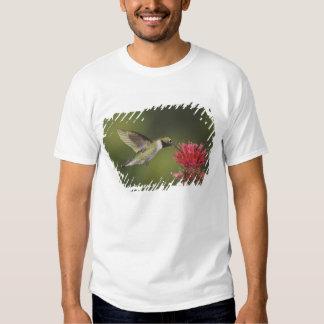 colibrí Amplio-atado, Selasphorus 2 Camisas