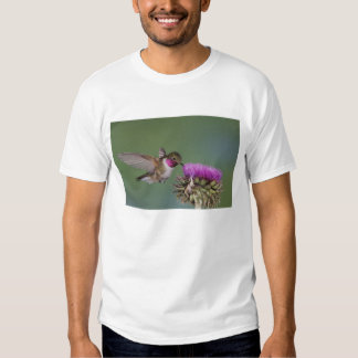 colibrí Amplio-atado, Selasphorus 2 Playera