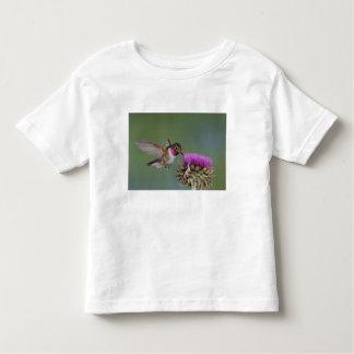 colibrí Amplio-atado, Selasphorus 2 Poleras