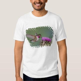 colibrí Amplio-atado, Selasphorus 2 Remera