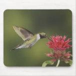 colibrí Amplio-atado, Selasphorus 2 Tapete De Raton