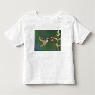 colibrí Amplio-atado, Selasphorus 4 Remera