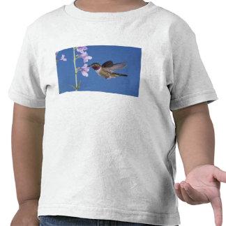 colibrí Amplio-atado, Selasphorus Camisetas